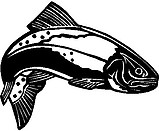 Trout fish, Vinyl decal sticker