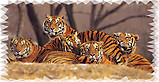 Tigers RV Mural for the back of your RV by the Square Foot