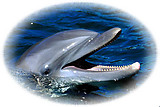 Dolphin RV Mural for the back of your RV by the Square Foot